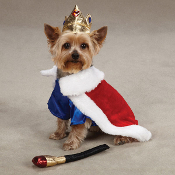 Royal Pup Costume